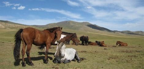 Yoga, découverte et équitation en Mongolie
