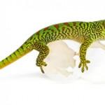 Gecko-de-Madagascar-©-Eric-Isselée
