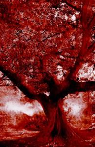 Tree - Franck Landron