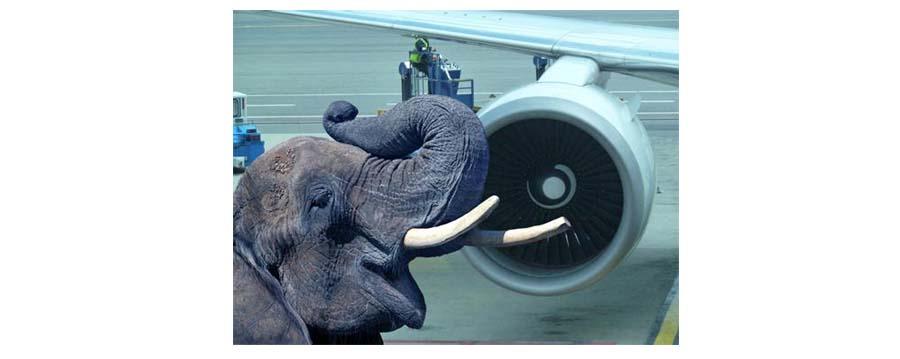 lui ou l'appel des elephants