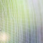 Fil de soie d'araignée