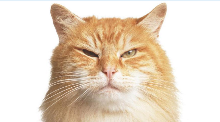Mon chat a mauvais caractère, Jasmine Chevallier