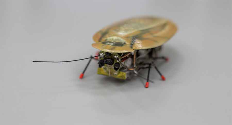 robot-cafard à six pattes