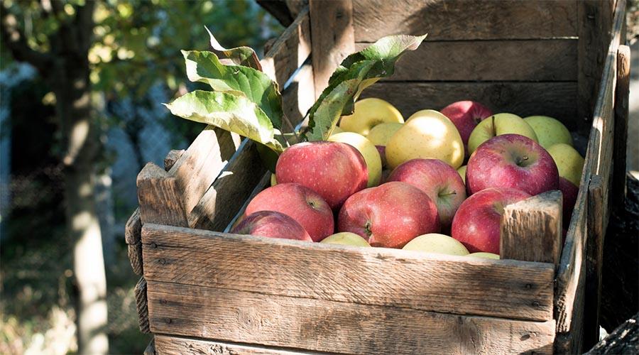pomme-vergers-de-la-silve