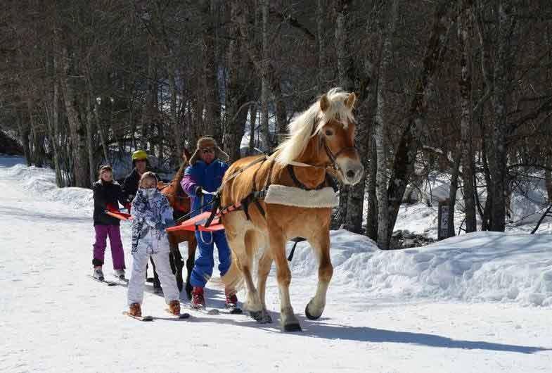 Val d'Arly - Ski joëring