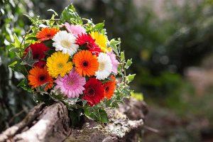 plantes d'intérieur dépolluantes à adopter