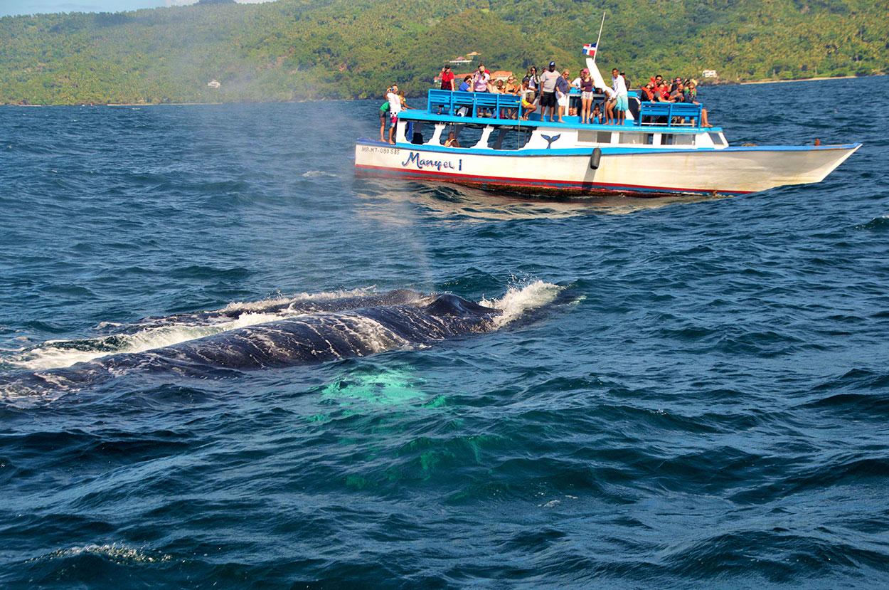 Baleine à Bosse à la République Dominicaine