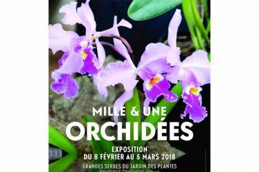 orchidées : Mille & une orchidées