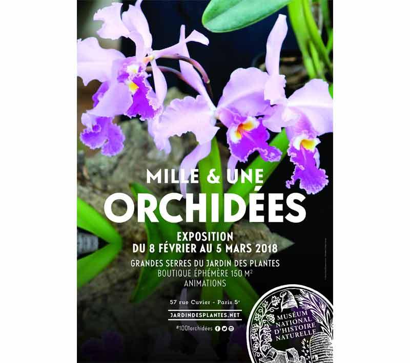 Mille et une orchidées dans les grandes serres du Jardin des ...