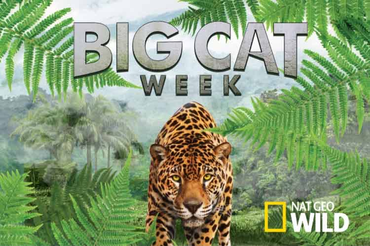 Big Cat Week 2018