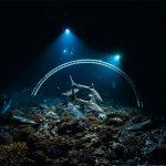 700 requins dans la nuit : L'arche sous-marine - ©Laurent Ballesta