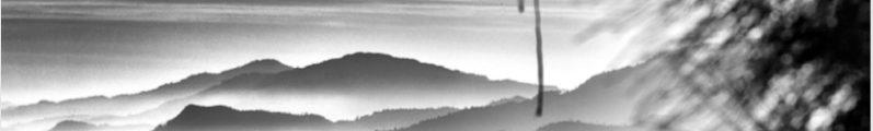 Matthieu Ricard : Contemplation