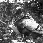 Premiere-Guerre-mondiale