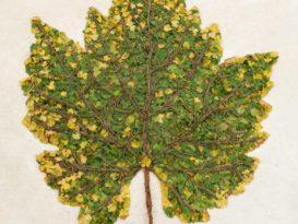 Vik Muniz : Chardonnay Leaf