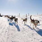 Balade en chiens de traîneaux sur le plateau du Guéry - massif du Sancy (63)