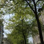 Paris 19 -2020 – Photo by Jean Marc Lebeaupin (123)