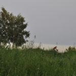 Photo Anna Pavlikovskaya – Walking boldly from the quarantine to the summer (38)