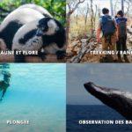 Madagascar-faune