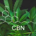 Le-CBN-ou-cannabinol