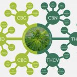 les-cannabinoides-et-le-cbd