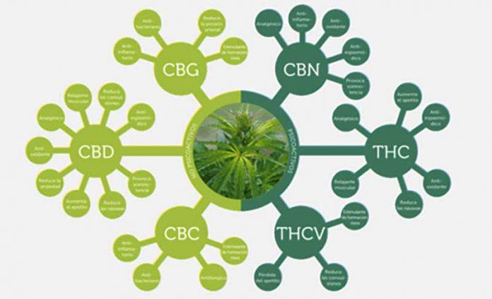 les cannabinoides et le cbd