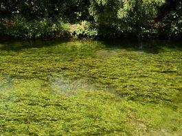 L'eau - La Sorgue